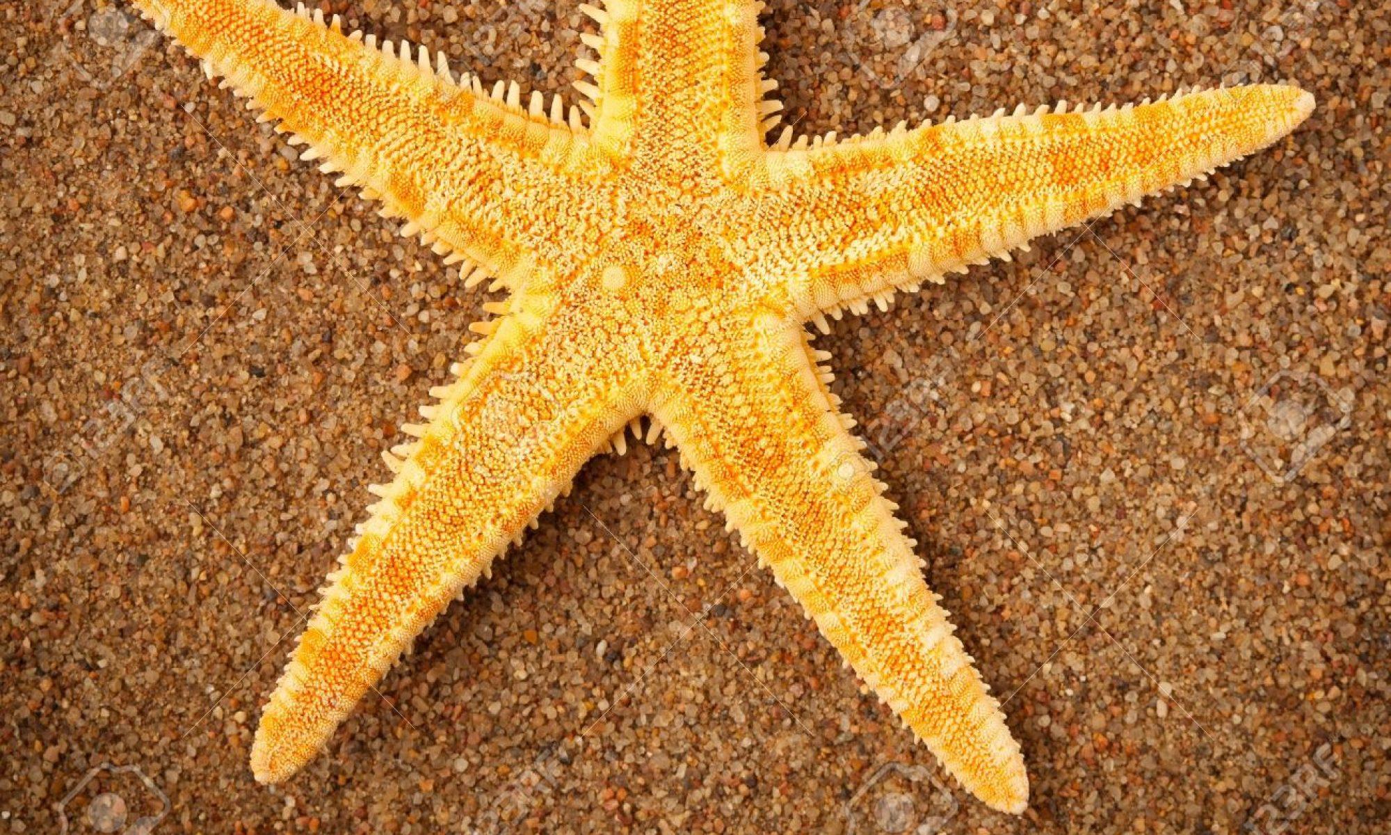 Starfish Polisher